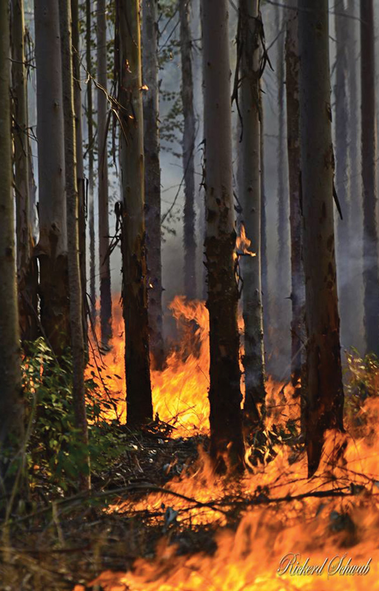 Mkhondo fires in early August