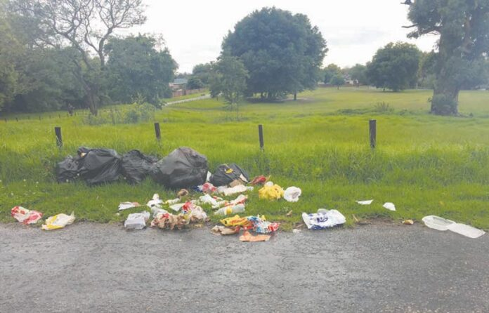Refuse bags torn by dogs