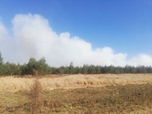 40 hectares of trees burnt down