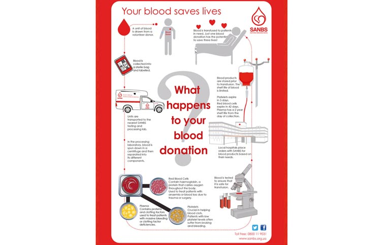 Photo 2 - What happens to your blood donation