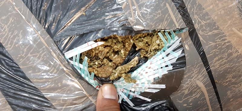 The dagga that was seized